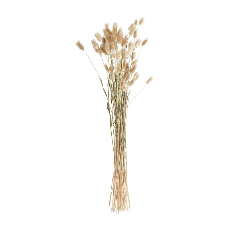 Lagurus - 70 cm