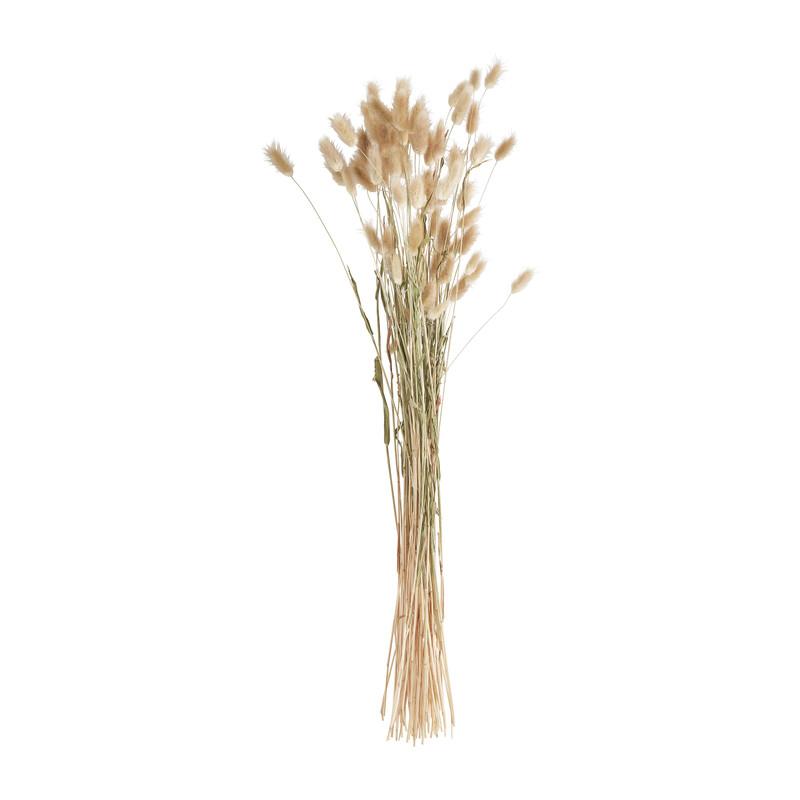 Lagurus - naturel - 60 cm