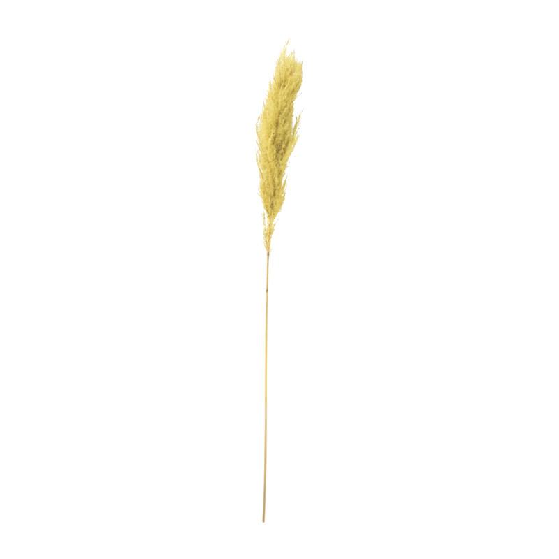 Pampas - geel - 115 cm