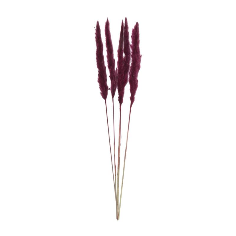 Pluim small - paars - 75 cm