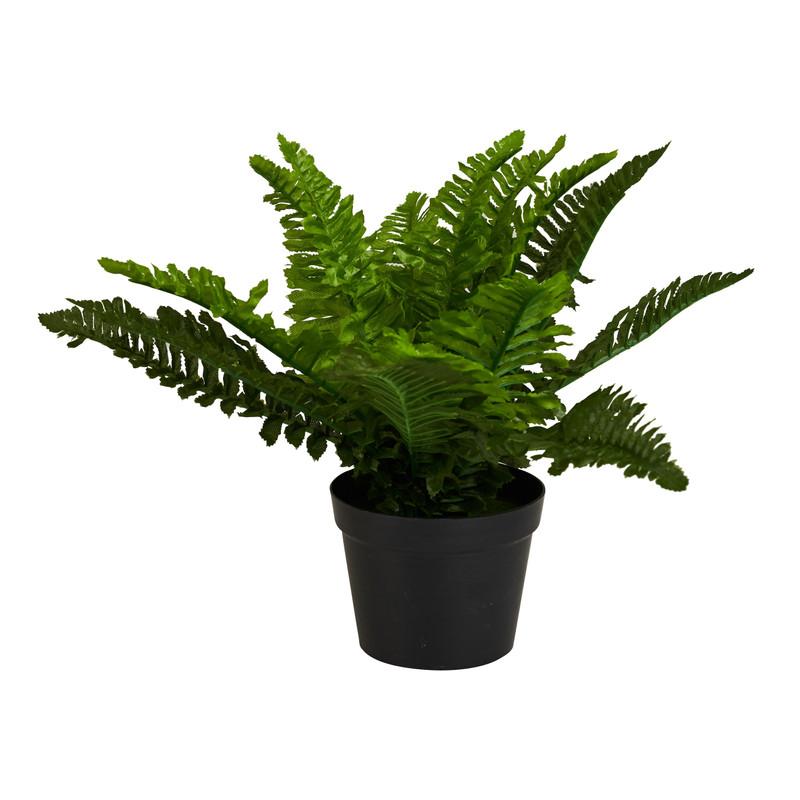 Varen in pot - 30 cm