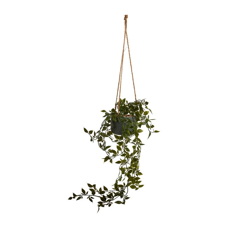 Hangficus in pot aan touw - 55 cm