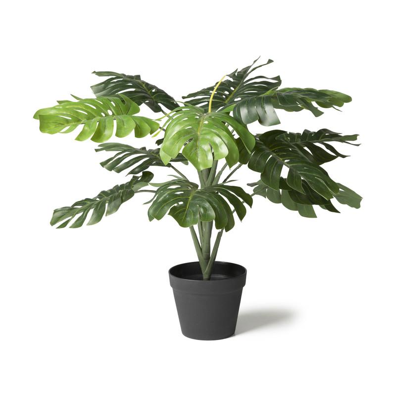 Monstera plant - Ø16x75 cm