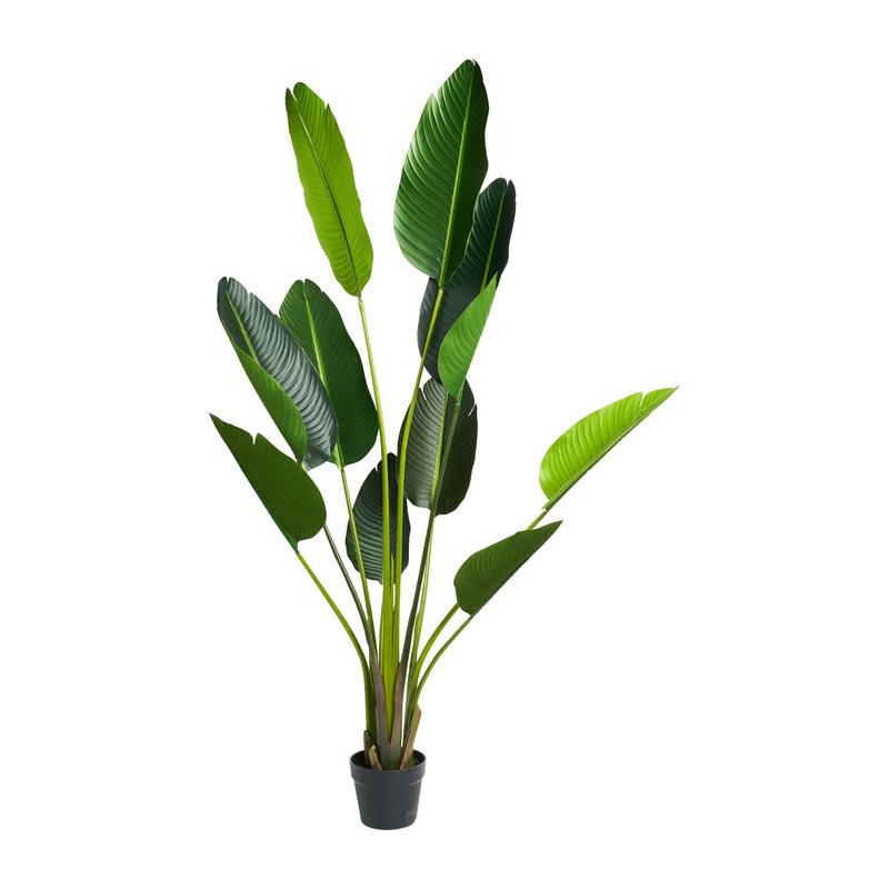 Sterelitzia kunstplant - 150 cm