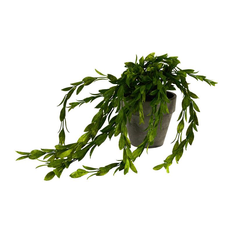 Hangplantje in potje - lang blad