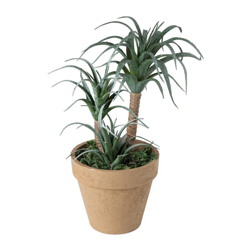 Vetplantje in keramiek pot - 10x26 cm